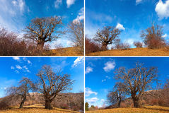 Vier Fotos von Kastanienbäumen im Winter stockfoto