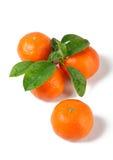 Vier frische Tangerinen mit Blättern lizenzfreies stockfoto