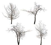 Vier geïsoleerde naakte bomeninzameling Royalty-vrije Stock Afbeeldingen