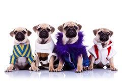Vier gekleidete Moppwelpenhunde Stockfotos