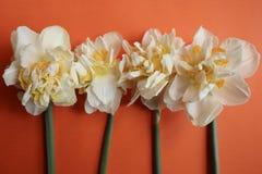Vier Gele narcissen op Heldere Oranje Achtergrond stock foto's
