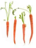 Vier gepackte Karotten Stockfotos