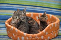 vier gestreepte katjes samen Stock Foto's