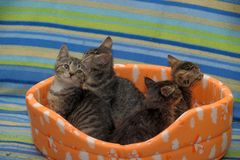 vier gestreepte katjes samen Stock Afbeeldingen