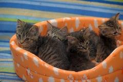 vier gestreepte katjes samen Stock Afbeelding