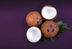 Vier gesunde Kokosnüsse knackten in halbem und in ganzem auf Blättern eines Grüns und auf einem dunklen purpurroten Hintergrund N Stockfotografie