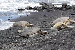 Vier grüne Meeresschildkröten auf Punaluu-Schwarz-Sand-Strand Lizenzfreie Stockbilder