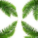 Vier groene bladeren Royalty-vrije Stock Foto