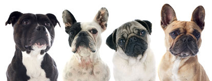 Vier honden Stock Fotografie