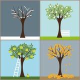 Vier Jahreszeitbäume Stockfotos