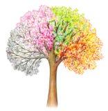 Vier Jahreszeiten Baum Handdrawing lokalisiert Stockfoto