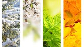 Vier Jahreszeiten des Jahres Stockbilder