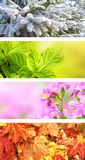 Vier Jahreszeiten des Jahres Lizenzfreie Stockbilder