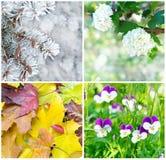 Vier Jahreszeiten: Frühling, Sommer, Herbst und Winter Stockbilder
