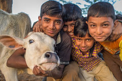 Vier jongens en kalf Royalty-vrije Stock Foto