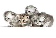 Vier Kätzchen auf Weiß Stockbilder