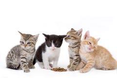 Vier Kätzchen sitzt lizenzfreie stockbilder