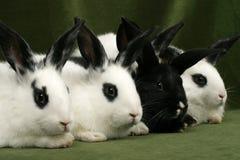 Vier Kaninchen Stockbilder