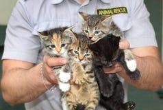 Vier katjes in de mannelijke handen Dierlijke redding stock afbeelding