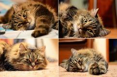 Vier katten Stock Afbeelding