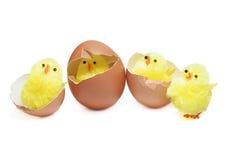 Vier kippen Royalty-vrije Stock Afbeeldingen