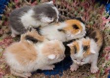 Vier kleine katjes Royalty-vrije Stock Fotografie