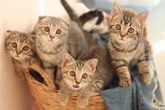 Vier kleine katten Stock Foto's