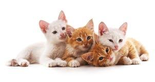 Vier kleine Katzen stockfoto