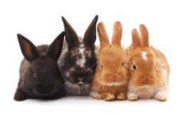 Vier kleine konijnen stock foto's