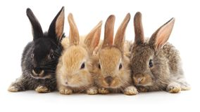 Vier kleine konijnen stock afbeeldingen