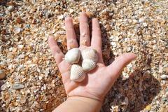 Vier kleine Oberteile in der Hand eines zweijährigen Kindes auf dem Strand an einem sonnigen Tag stockfoto