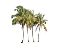 Vier kokosnotenpalmen die op witte achtergrond worden geïsoleerd stock foto