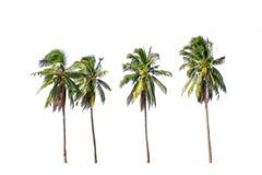 Vier kokosnotenpalmen die op witte achtergrond worden geïsoleerd royalty-vrije stock afbeeldingen