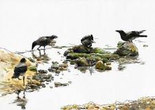 Vier Krähen nahe dem Fluss Lizenzfreie Stockbilder