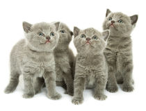 Vier Kätzchen über Weiß Lizenzfreie Stockfotografie