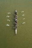 Vier Männer, die auf der Donau rudern stockfotografie