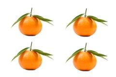 Vier mandarijnen Stock Foto