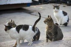 Vier obdachlose Katzen auf den Straßen Stockfotos