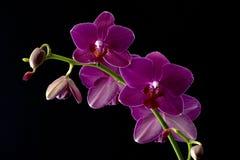 Vier Orchideeën Stock Afbeeldingen