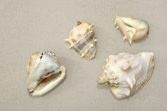 Vier overzeese shells op zand Stock Foto's