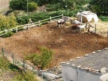 Vier paarden in een paddock in openlucht in Catalonië, Spanje stock afbeelding