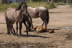 Vier paarden lopen Zandweg op het gebied met bomen ver weg travelling stock foto's