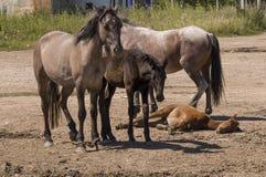 Vier paarden lopen Zandweg op het gebied met bomen ver weg travelling royalty-vrije stock fotografie
