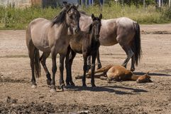 Vier paarden lopen Zandweg op het gebied met bomen ver weg travelling stock fotografie