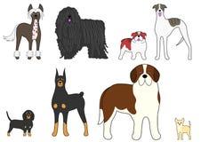 Vier Paare der kontrastierenden Hunde Lizenzfreie Stockfotografie