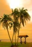 Vier palmen stock foto's