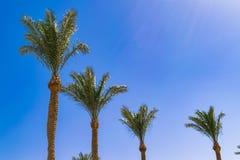 vier palmenbomen op een blauwe hemel en een blauwe wolkenachtergrond, royalty-vrije stock afbeeldingen