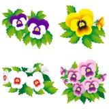 Vier pansies Royalty-vrije Stock Foto's