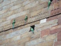 Vier Papageien auf einer Wand stockfoto
