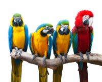 Vier papegaaien Stock Foto's